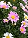 silent_flower