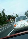 silv_beetle